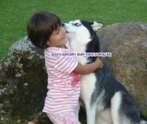 bambini-siberian-husky