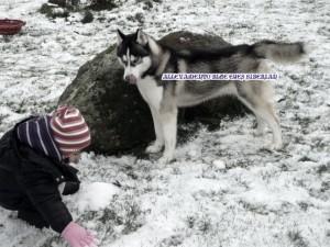 palle-neve-husky-bambino