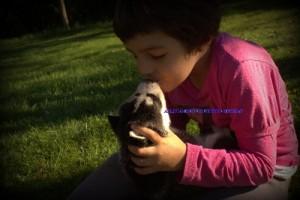 foto-cuccioli-siberian-husky-allevamento-blue-eyes-014
