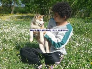 foto-cuccioli-siberian-husky-allevamento-blue-eyes-024