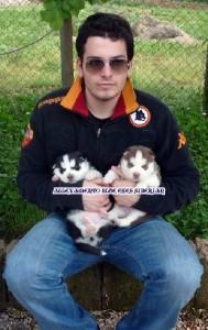foto-cuccioli-siberian-husky-allevamento-blue-eyes-033
