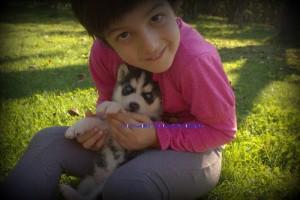 foto-cuccioli-siberian-husky-allevamento-blue-eyes-133