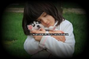 foto-cuccioli-siberian-husky-allevamento-blue-eyes-141