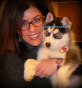 ice-blue-eyes-siberian-husky-cucciolo