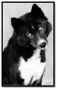 origini siberian husky