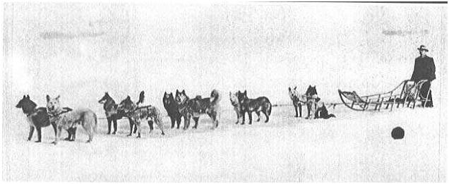 storia-del-siberian-husky